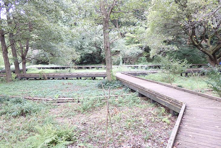 観察園内木道