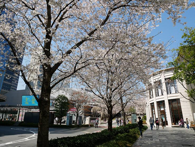 赤坂サカス内の坂