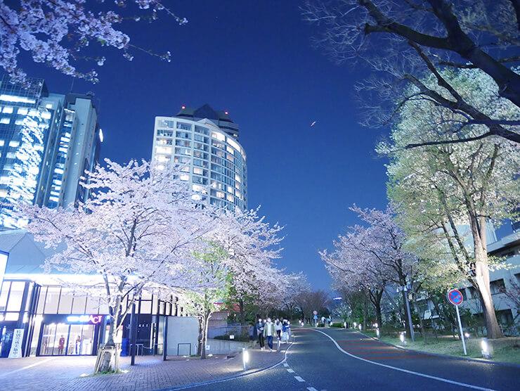 赤坂サカスの夜桜