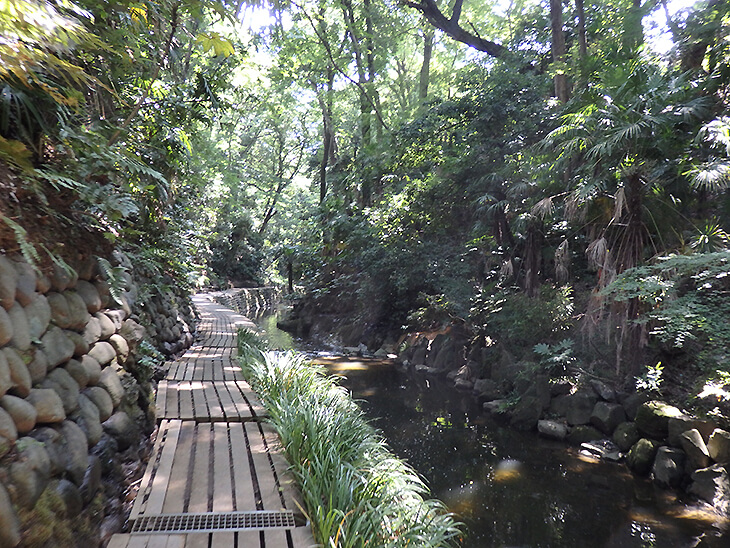 谷沢川沿いの遊歩道